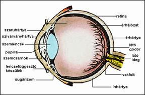 szürkehályog látás-helyreállítási technikája
