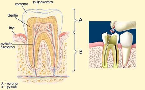 hogyan lehet kezelni a szájüreg artrózisát