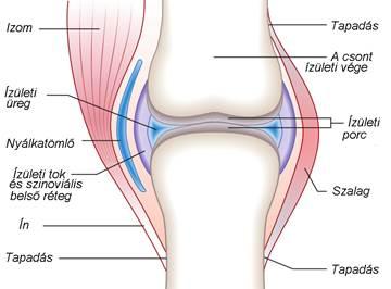 milyen gyógyszerek a 2. fokozatú artrózis kezelésére)