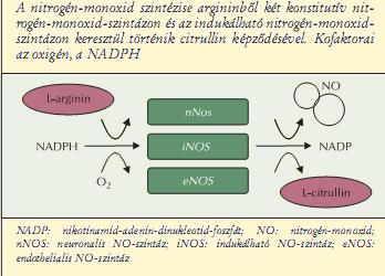 nitrogén-oxid zsírvesztés)