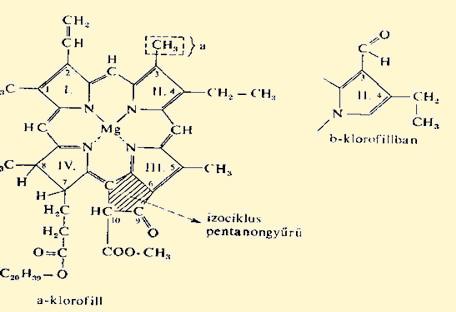 klorofill pikkelysömör kezelése)